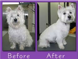 Dog Grooming in Torrance